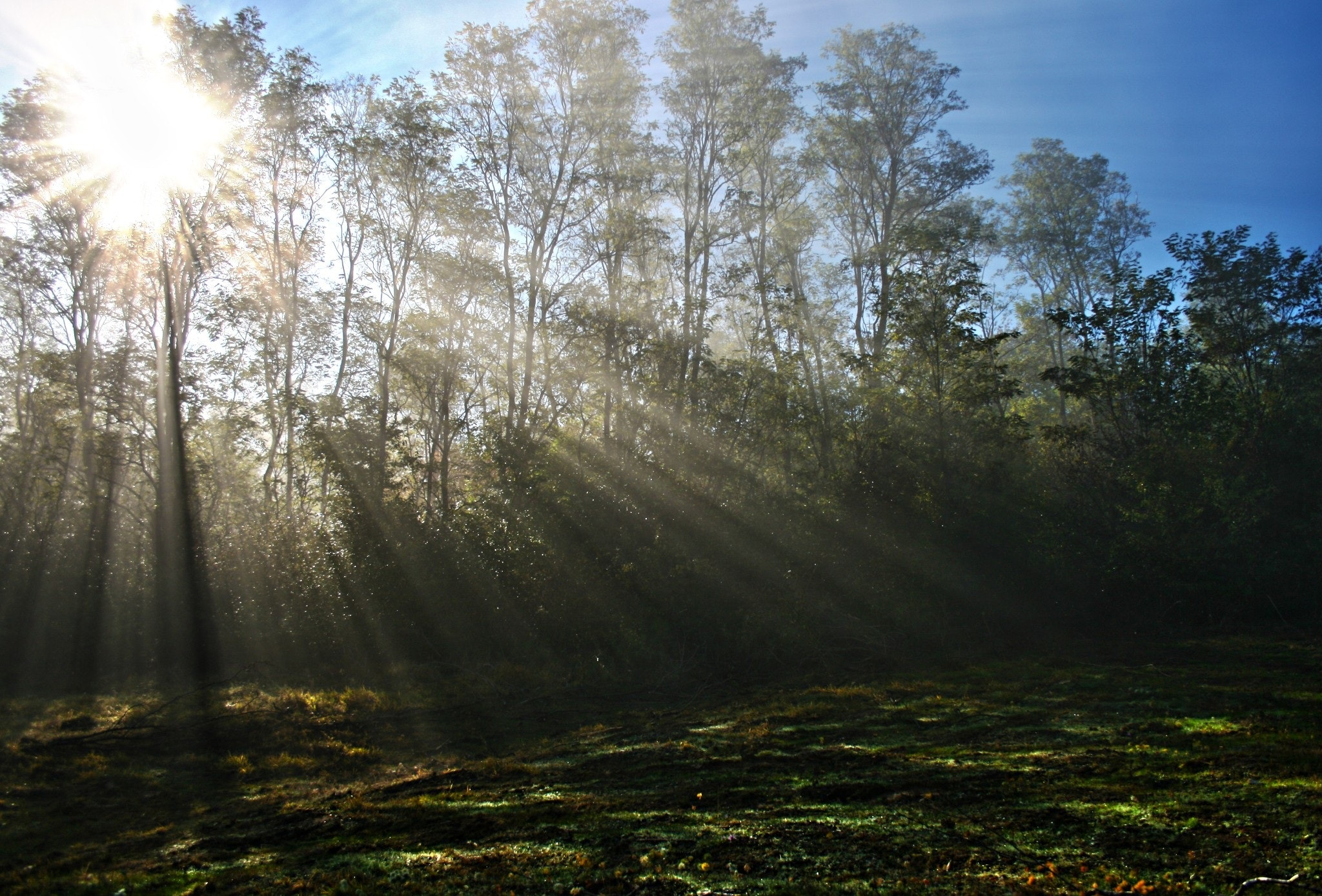 forest-grass-morning-47864